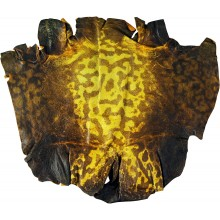 Genuine frog / toad skin FROGSK01 Yellow