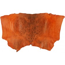 Genuine frog / toad skin FROGSK02 Orange