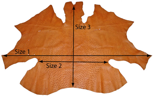 How to measure ostrich skin dimensions